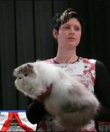 "Jokercats Lilac Drops'n Candys"" at a show in Forchheim, Germany"