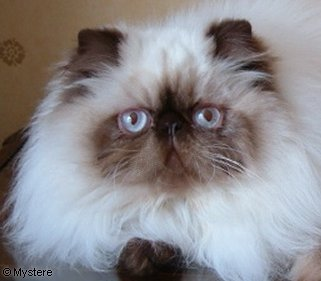 cats and urinary tract infections